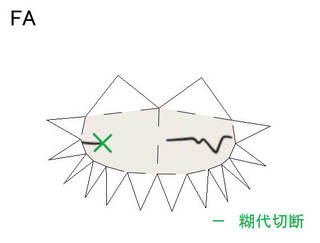 kyoko_FA_cut.JPG