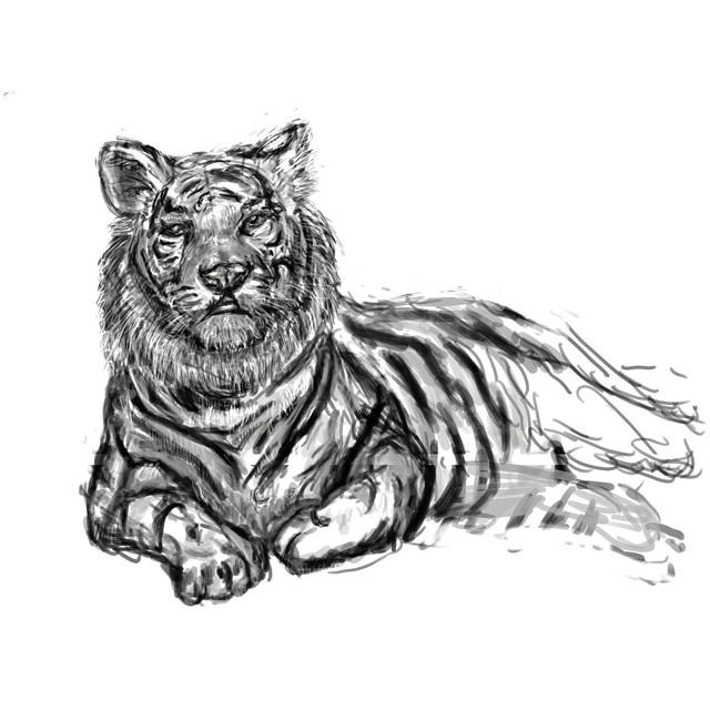 tiger_ruf.jpg